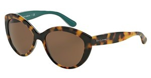 Dolce & Gabbana DG4239 289173 BROWNTOP HAVANA ON PETROLEUM
